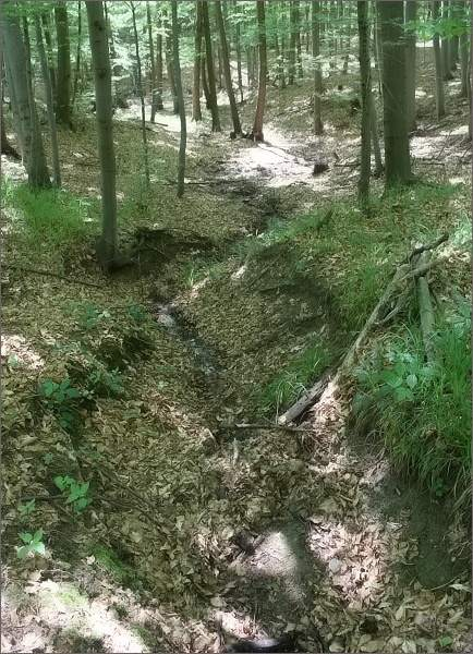 Až několik stovek metrů pod pramenem začíná Kyjovka připomínat vodní tok