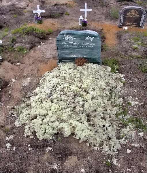 Hřbitov v Kautokeinu. Po pohřbu je hrob pokryt vrstvou lišejníku