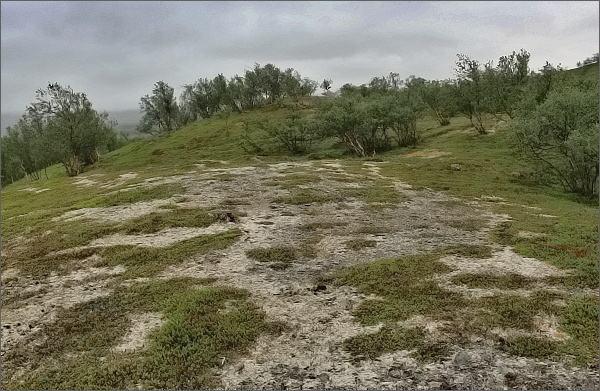 Národní park Stabbursdalen. Přechod vegetačního pásma tajgy v tundru