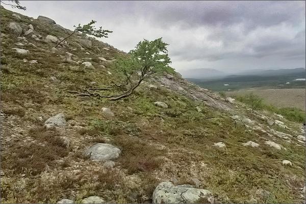 Národní park Stabbursdalen. Přechod vegetačního stupně tajgy v tundru na úpatí hory Stuorra Binalvárri