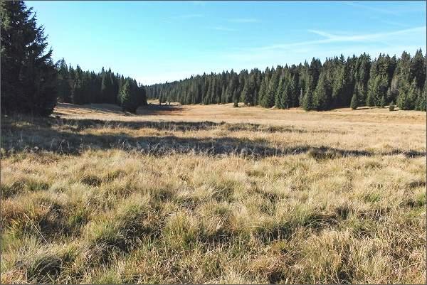 Národní přírodní rezervace Rolavská vrchoviště, Lučiny