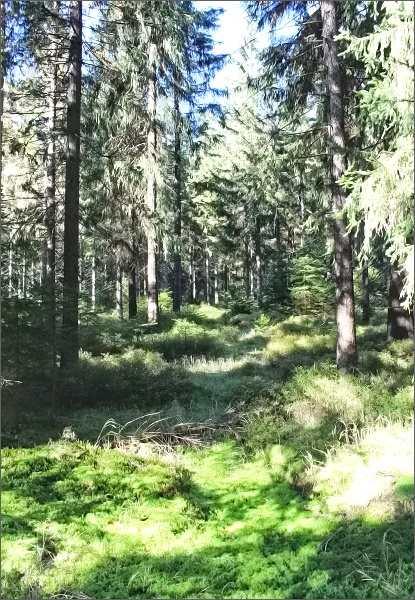 Národní přírodní rezervace Rolavská vrchoviště