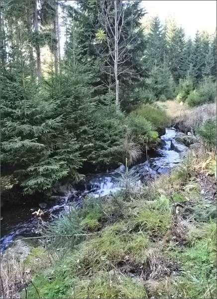 Bukový potok
