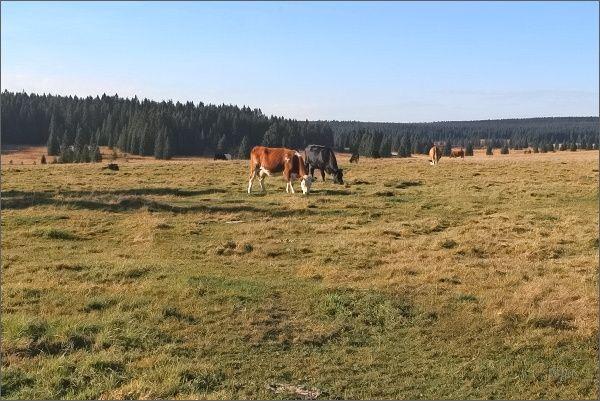 Pastviny bez kříže