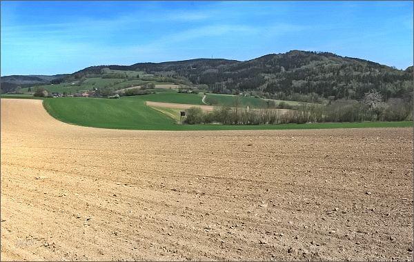 Horní les a Javorův kopec