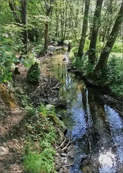 Meandry Bílého potoka