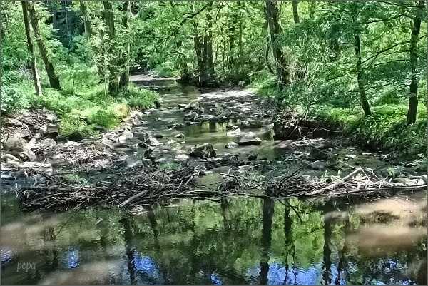 Bílý potok nad Veverskou Bítýškou