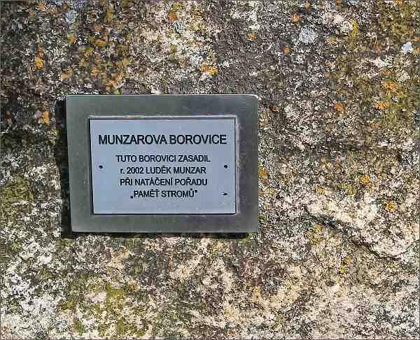 Vítochov. Pamětní tabule u borovice Luďka Munzara