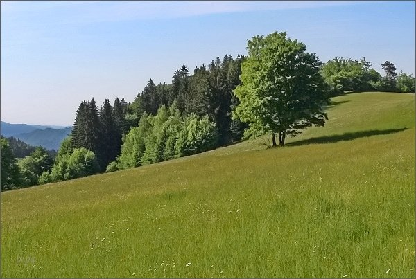Krajina pod Javorovým kopcem