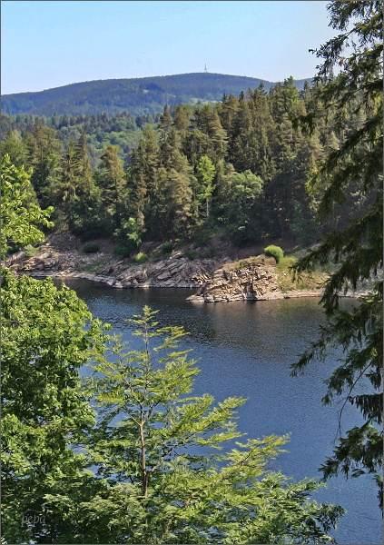 Vírská přehrada, pohled k Hornímu lesu