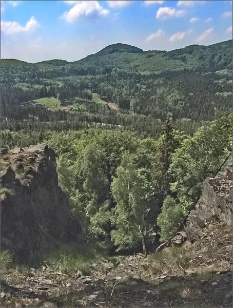Javorek z Chřibského vrchu