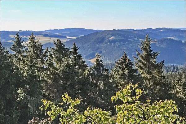 Horní les z Prosiček