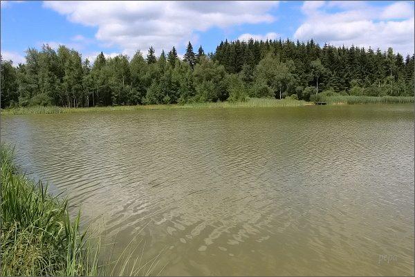 Rybník Sykovec