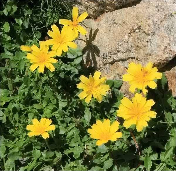 Květena na Monte d´ Oro