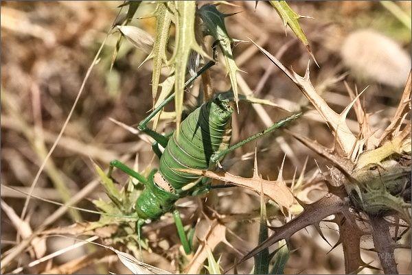 Středomořský hmyz