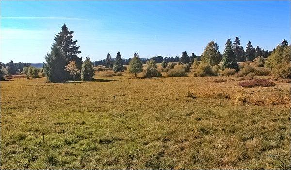 Krajina v centrální oblasti Slavkovského lesa (NPP Upolínová louka pod Křížky)