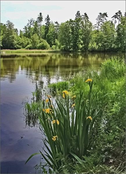 Rybník Šimků Černá