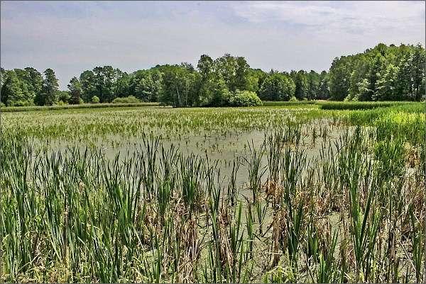 Bezejmenný rybník u Mirochova