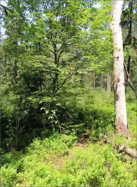 Přírodní rezervace Losí blato u Mirochova