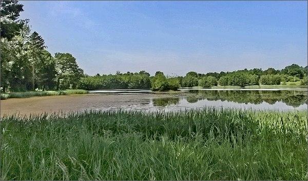 Rybník Mařka