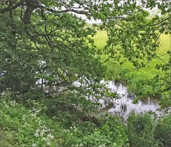 Mokřady v NPR Stará a Nová řeka