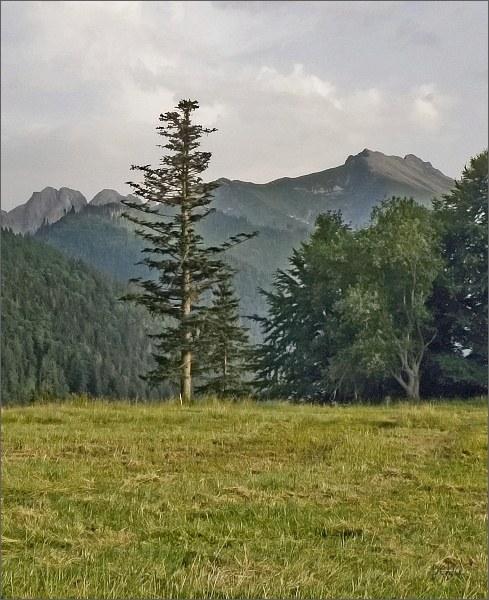 Široká od Tatranskej Javoriny