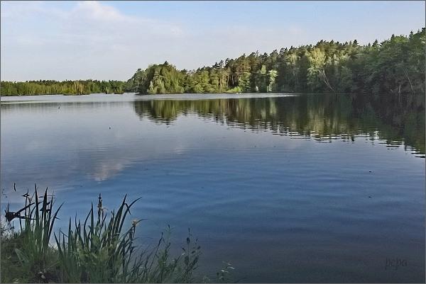 Rybník Vyšehrad