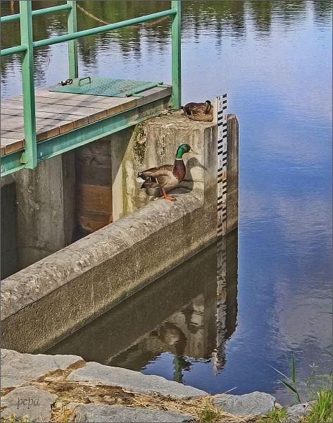 Lužnice. Rybník Namša a jeho obyvatelé