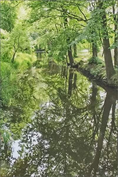 Zlatá stoka pod Velkým Lomnickým rybníkem
