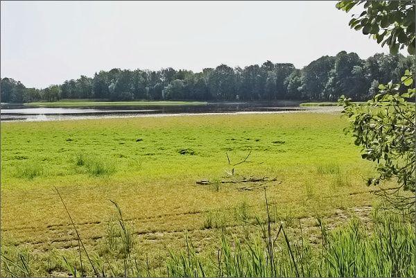 Velký Lomnický rybník