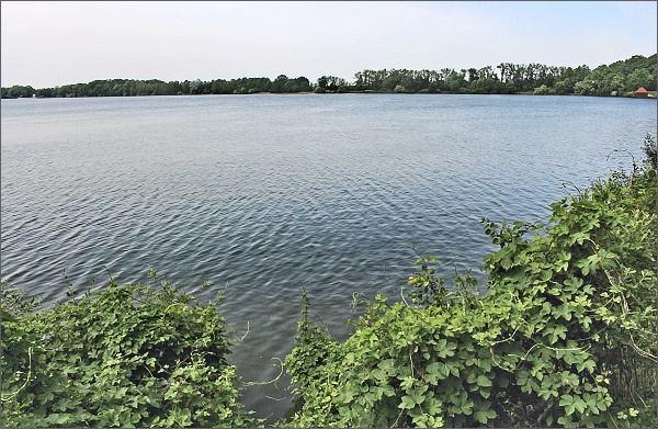 Horusický rybník