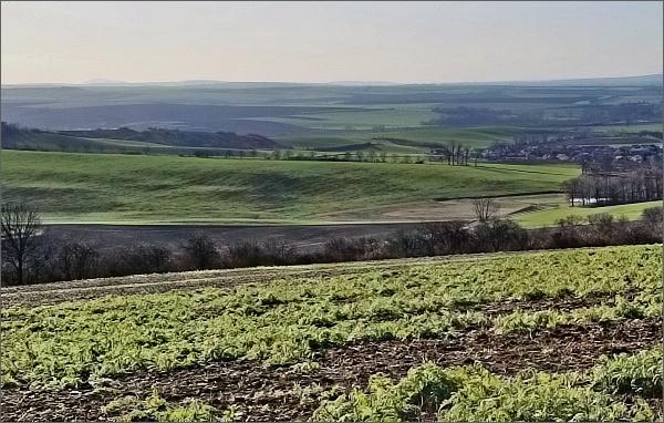 Pohled od Letonického hájku k jihozápadu. Vlevo na horizontu Pálava
