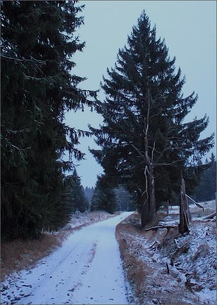 Cesta do Rolavských vrchovišť