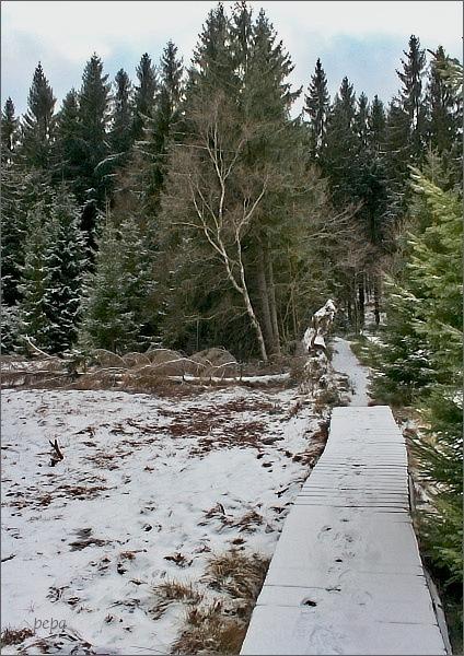 Rašeliniště pod Tisovským vrchem