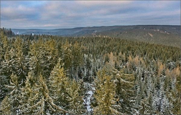 Krušnohorské lesy