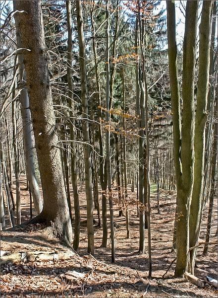 Národní přírodní rezervace Rohová