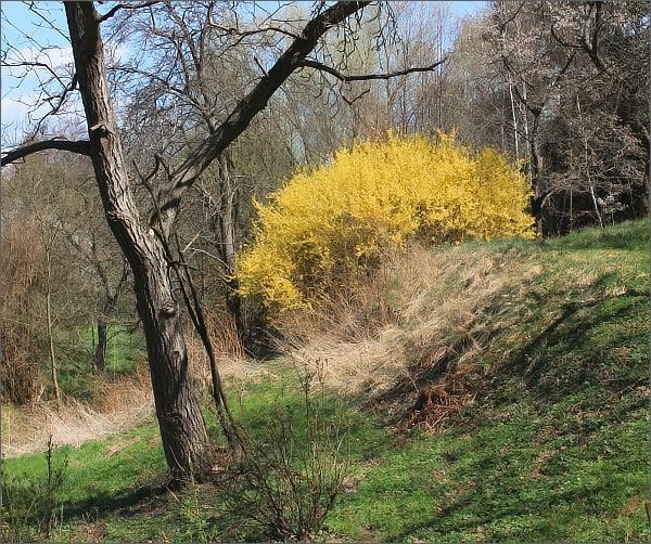 Jarní idyla pod Runářovem