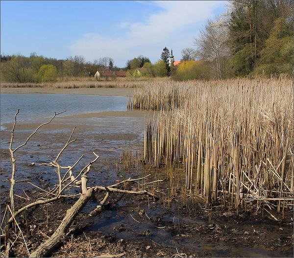 Divoké břehy rybníků pod Konicí