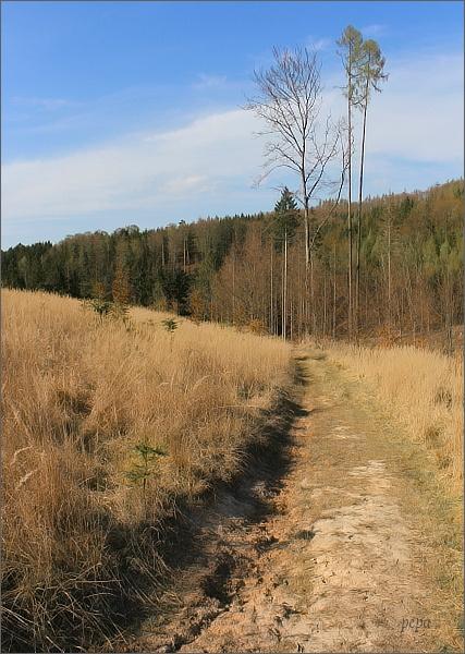 Nad údolím Biskupického potoka