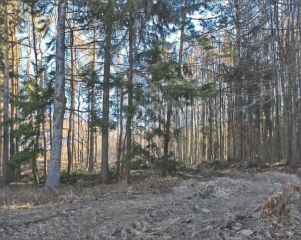Prořídlé lesy v PP Sýkoř