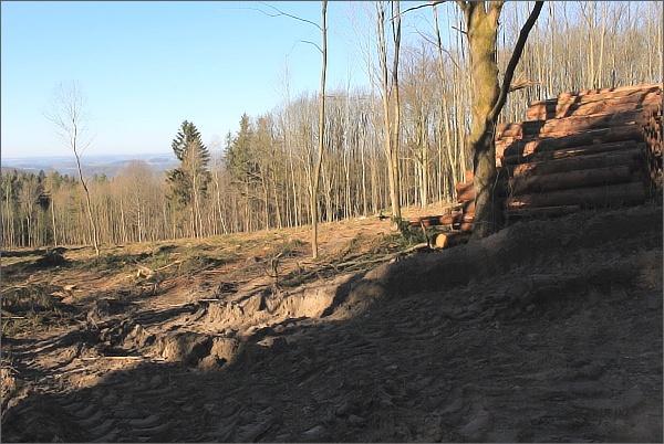 Vymýcené lesy v PR Pod Sýkořskou myslivnouVymýcené lesy v PR Pod Sýkořskou myslivnou