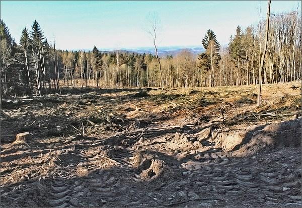 Vymýcené lesy v PR Pod Sýkořskou myslivnou