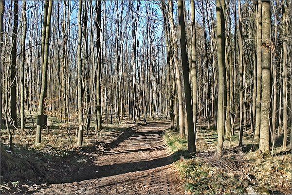 Enkláva listnatého lesa v PR Pod Sýkořskou myslivnou