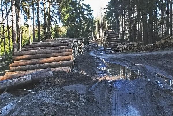 Jeden ze symbolů dnešních dnů. Hromady vytěženého dřeva kolem lesních cest