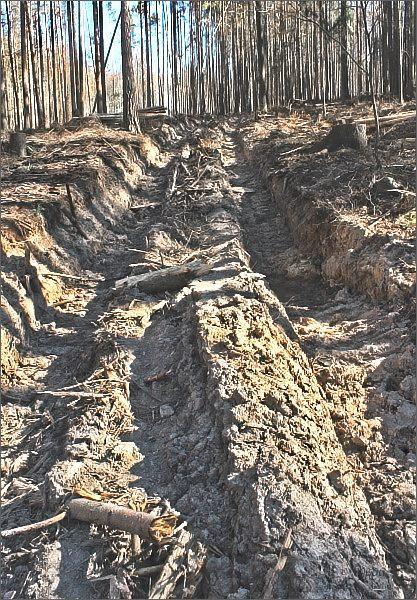 Zničená lesní cesta v lese nad Skoroticemi