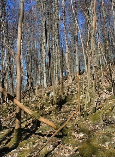 Přírodní rezervace Hrádky