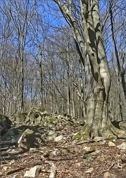 Přírodní památka Habrová