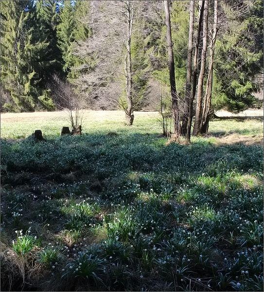 Přírodní rezervace Ploník