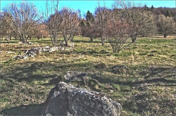 Chráněná území Hornosvratecké vrchoviny