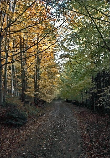 Cesta podzimním lesem (zatím bez bláta)